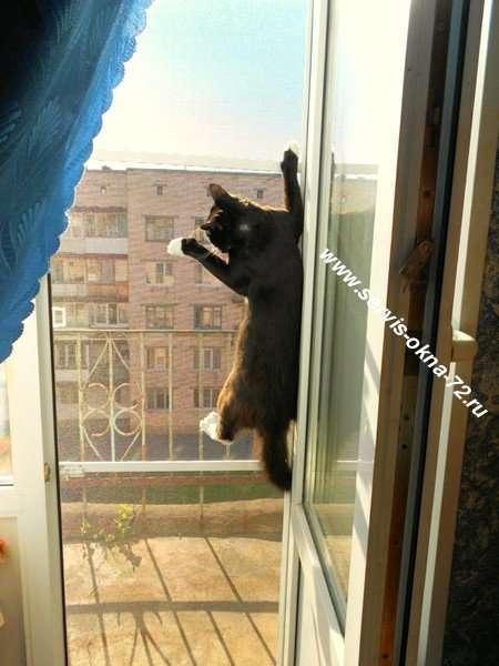 Москитная сетка антикошка на балконную дверь. Тюмень.